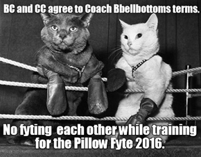 At KKPS Coach Bellbottom imposes strict terms at Pillow Fyte Camp.
