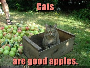 Cats  are good apples.