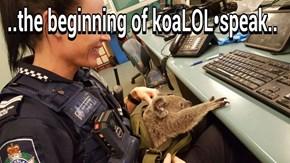 The beginning of koaLOL•speak