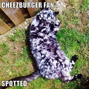 CHEEZBURGER FAN  SPOTTED