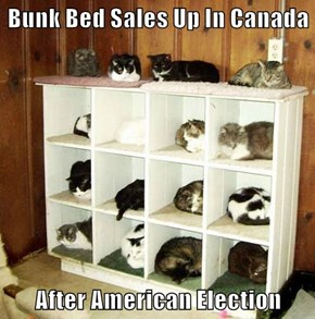 Bunk Bed Sales Up In Canada  After American Election
