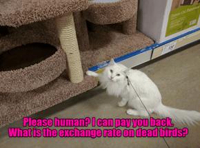 Please human?