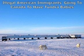 Illegal American Immigrants  Going To Canada To Have Tundra Babies