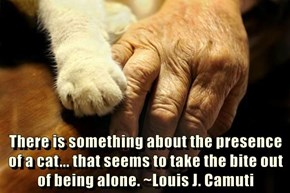 There is something about the presence of a cat... that seems to take the bite out of being alone. ~Louis J. Camuti