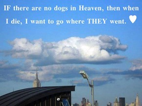 IF there are no dogs in Heaven, then when I die, I want to go where THEY went. ♥
