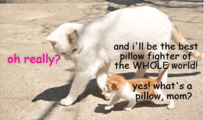 Pillow Fite