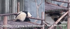 These Animal Gifs Are Made a Thousand Times Funnier With Text Added