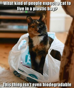 Cats--Stewards of the Environment