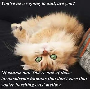 You're never going to quit, are you?  Of course not. You're one of those inconsiderate humans that don't care that you're harshing cats' mellow.