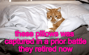 peaceful pillows