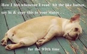 How I feel whenever I read: hit the like button, say hi & copy this to your status . .   fur the 99th time