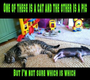 Perhaps Both Are Pigs