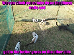 We can climb out or take down the flimsy walls and  get to the better grass on the other side