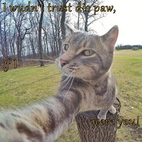 I wudn't trust dis paw, if I  were you!
