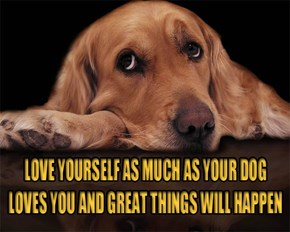 Dogs love is unconditional!!!