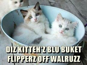 DIZ KITTEH'Z BLU BUKET FLIPPERZ OFF WALRUZZ
