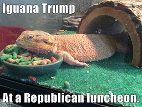 Iguana Trump  At a Republican luncheon.