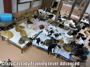 Crazy Cat Lady Training Level: Advanced