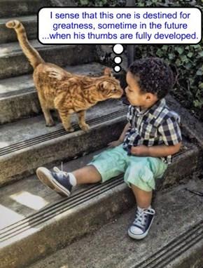 seer cat