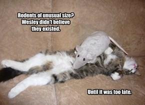 R.O.U.S., Wesley.