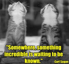 """Somewhere, something incredible is waiting to be known."""