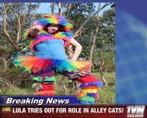 Breaking News - LULA TRIES OUT FOR ROLE IN ALLEY CATS!