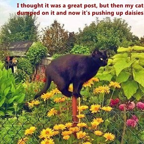 I thought it was a great post, but then my cat dumped on it and now it's pushing up daisies