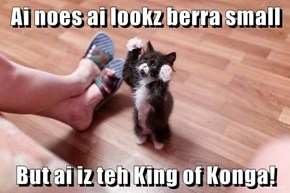 Ai noes ai lookz berra small  But ai iz teh King of Konga!