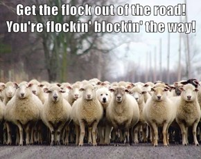 Get the flock out of the road! You're flockin' blockin' the way!