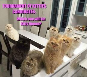 TOURNAMENT OF KITTIES CANDIDATES;
