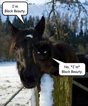 OK, fine, you're *both* Black Beauty.