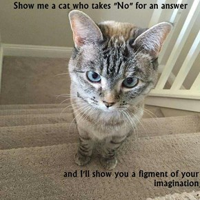 "Show me a cat who takes ""No"" for an answer  and I'll show you a figment of your imagination                                                                                                       ."