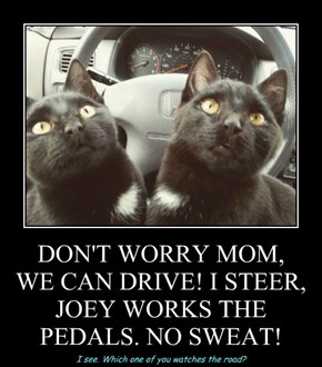 DON'T WORRY MOM, WE CAN DRIVE! I STEER, JOEY WORKS THE PEDALS. NO SWEAT!