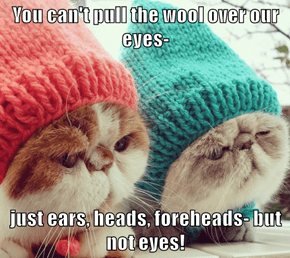 You can't pull the wool over our eyes-  just ears, heads, foreheads- but not eyes!