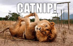 CATNIP!