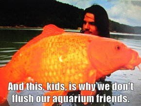 And this, kids, is why we don't flush our aquarium friends.