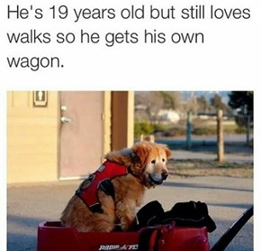 When Our Dog Was Young, He Pulled ME In This Wagon: Now At This Age, It's My Time To Return The Favor.