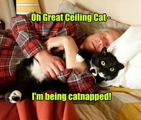 Oh Great Ceiling Cat -        I'm being catnapped!