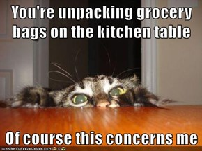 Think Of Your Kitty Just Like A TSA agent: He's going to insist on checking all your packages.