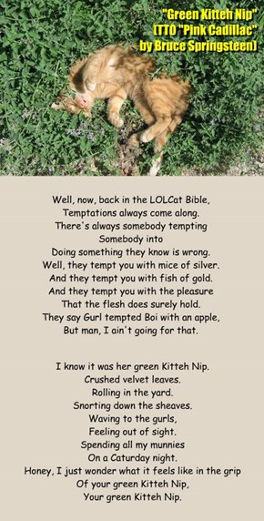 """Green Kitteh Nip"" (TTO ""Pink Cadillac"" by Bruce Springsteen)"