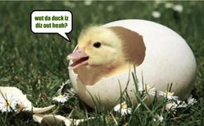 wut da duck iz diz out heah?