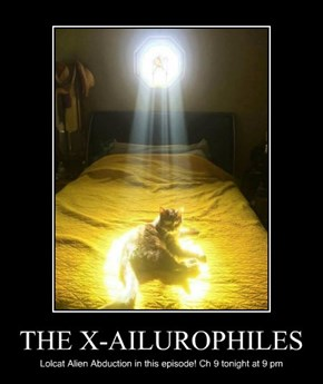 THE X-AILUROPHILES