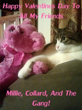 Happy Valentines Day To All My Friends  Millie, Collard, And The Gang!
