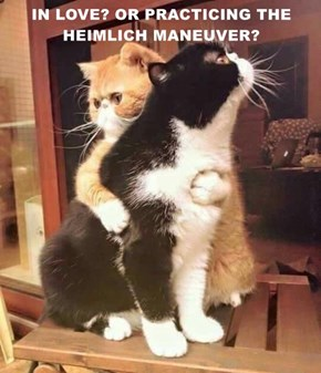 IN LOVE? OR PRACTICING THE HEIMLICH MANEUVER?
