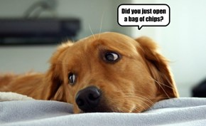 Did you just open a bag of chips?