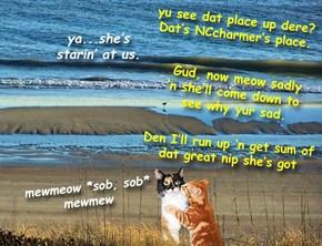 Sitting on deh beach wid NCcharmer's nip. Can id get any better!