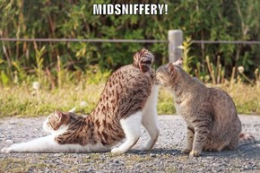 MIDSNIFFERY!