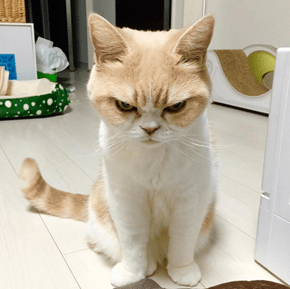 Internet Meet Koyuki, Your New Frowny Cat