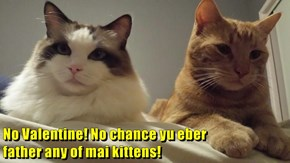 No Valentine! No chance yu eber                                                                                                                                         father any of mai kittens!