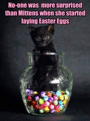 No-one was  more surprised than Mittens when she started laying Easter Eggs
